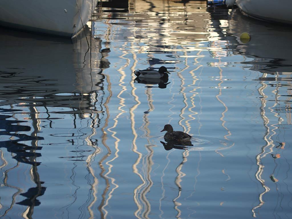 paparelle sul lago di bolsena