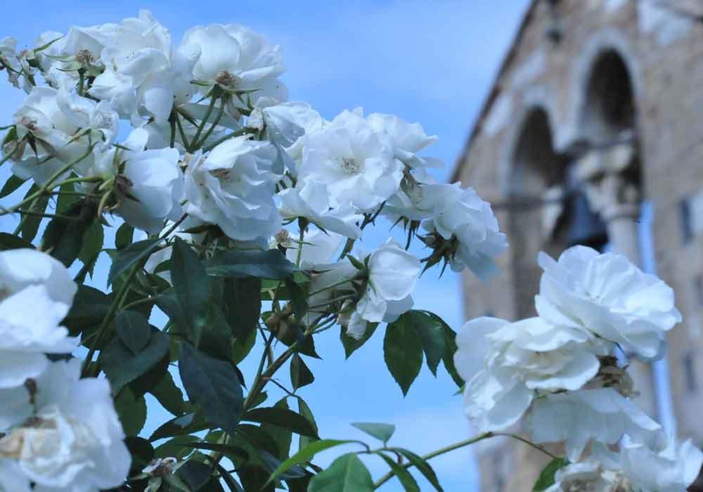 Villa celimontana fiori